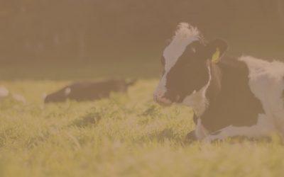 Lácteo free, buscando el correcto reemplazo de proteínas y calcio