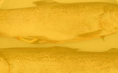 Pescetarianos: nutrición que se basa en productos del mar